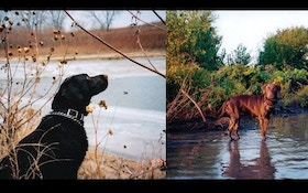 Hunting Dogs And Hypothermia