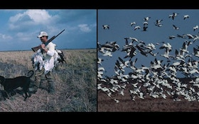 Deadly Snow Goose Hunting Technique