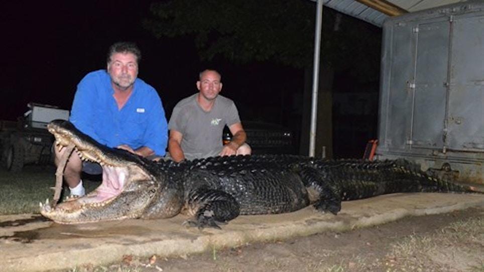 826-Pound, Over 14-Foot Alligator Sets 2 Mississippi Records