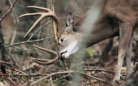Great whitetail hunters comment on hunting the rut