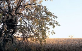 Bowhunting's 3 Best Stands For The Opener