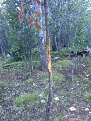 Elk sign is easy to spot, and spring is the perfect time to find it before the fall hunting season.