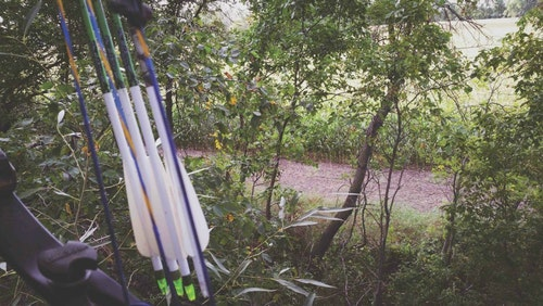 A view from the author's treestand, hung in a shelterbelt of thick deciduous trees.