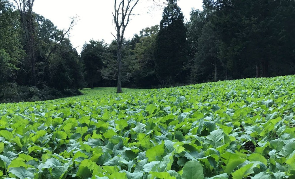Food Plot Shape: Why Long and Narrow Is Best for Whitetails