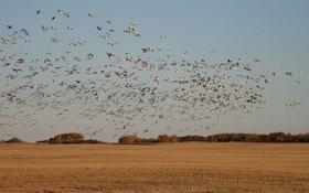 Freelancing Across the Prairie