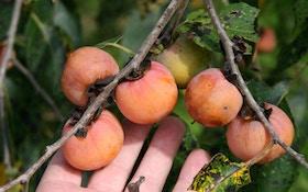 Grow Better Wildlife Fruit Trees