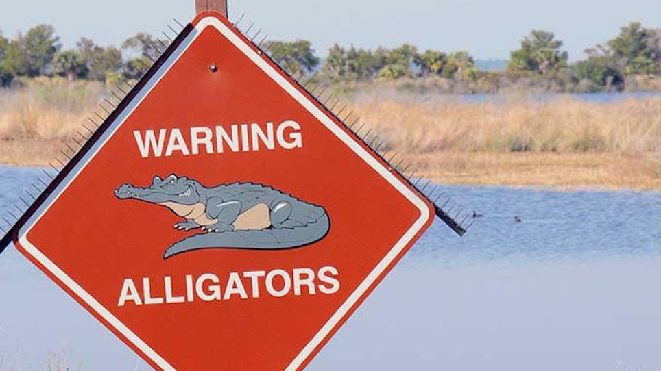 Alligator Kills 28-Year-Old Texas Man During Late-Night Swim