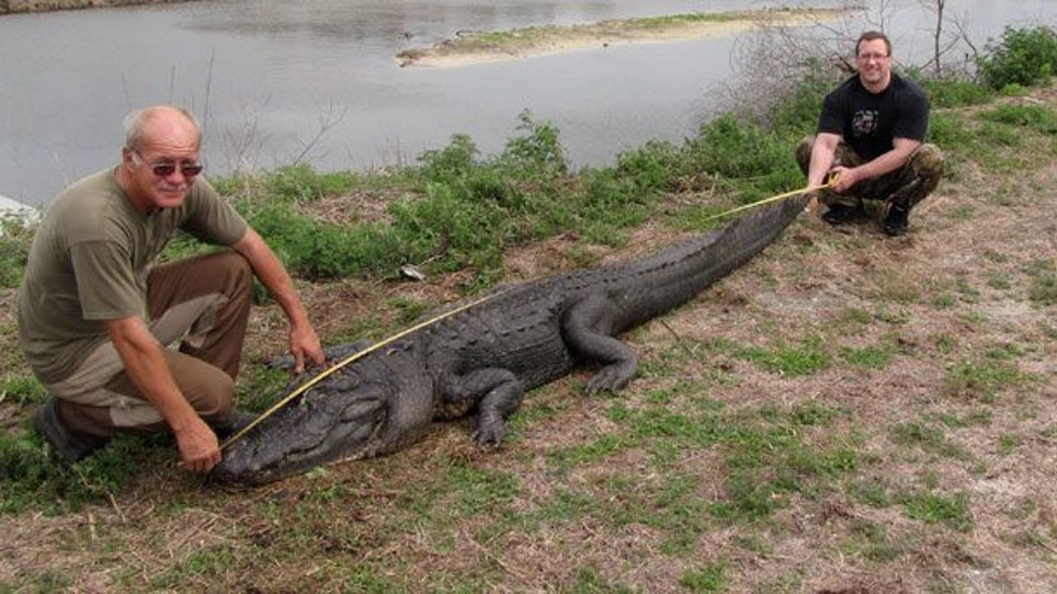 Shot placement nets the 22nd largest gator taken