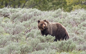 "Famed Photographer Says Hunters ""Don't Have the Right"" To Kill Grizzlies"