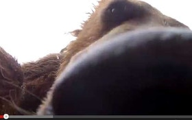 VIDEO: Grizzly bear thinks camera is food