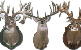 Whopper Whitetails — The Biggest Bucks On Record