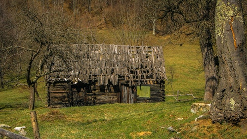 Old sheds, farm houses and other structures in or adjacent to cow pastures are typically overgrown and neglected: perfect wildlife sanctuaries. Photo: iStock