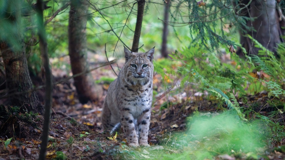 Citizen scientists: how hunters contribute to wildlife research, conservation