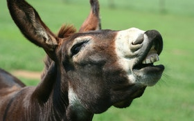 Guard donkey stomps out landowner's coyote problem