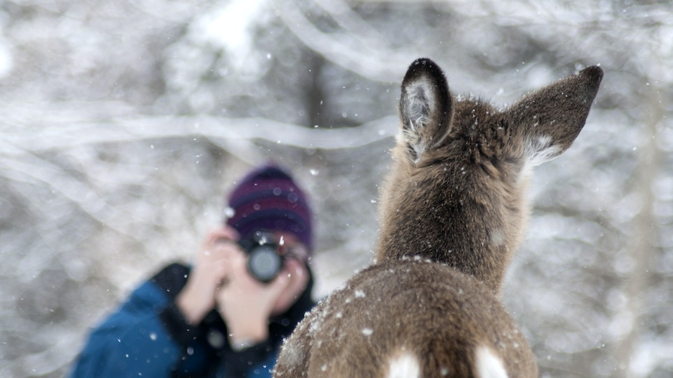What the Wildlife-Viewing Trend Means For Hunting's Future
