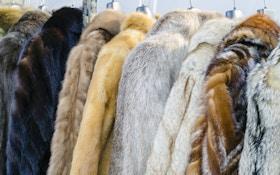 Video: Exposing fake news about fake fur