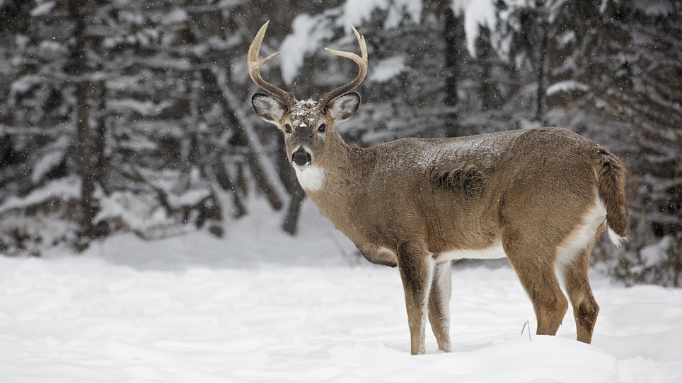 Hunting Whitetails In Extreme Cold Weather