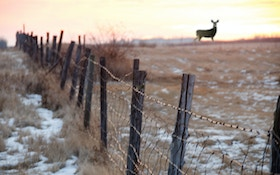 Three Reasons Our Ecosystem Needs More Deer Hunters