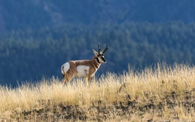 3 Shooting Tips for Pronghorn Adventure