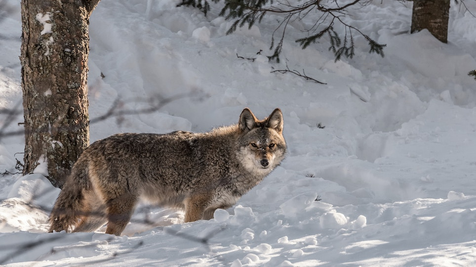 Proposed Bill Would Allow Anti-Hunters To Infiltrate Vermont Fish and Wildlife Board