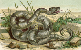 Top 10 Venomous Snakes in North America
