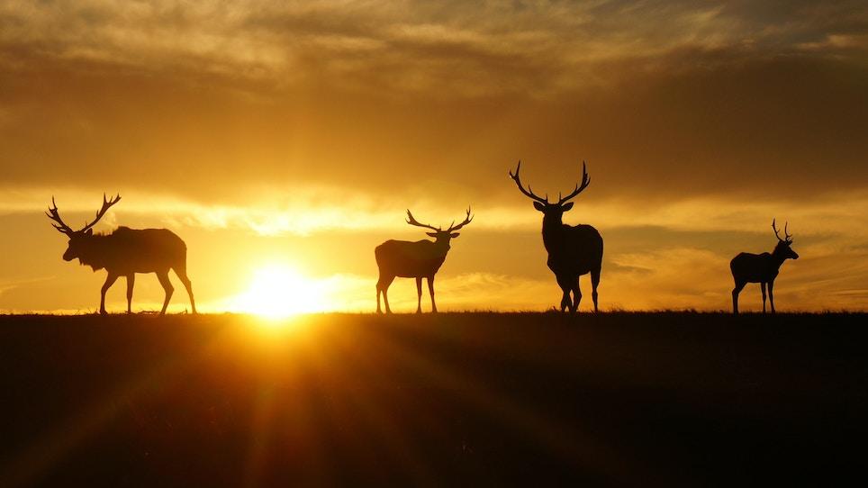 What makes hunting at dawn so magical?