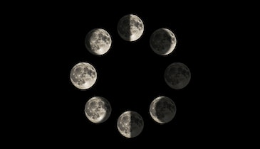 Moon Phases Don't Affect the Deer Rut