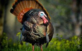 Your guide to hunting Eastern turkeys