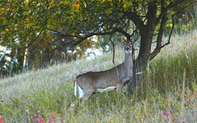 How to plant fruit trees for deer