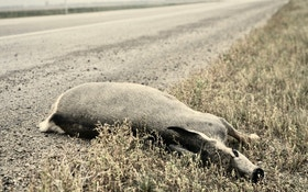 Yes, you can eat roadkill