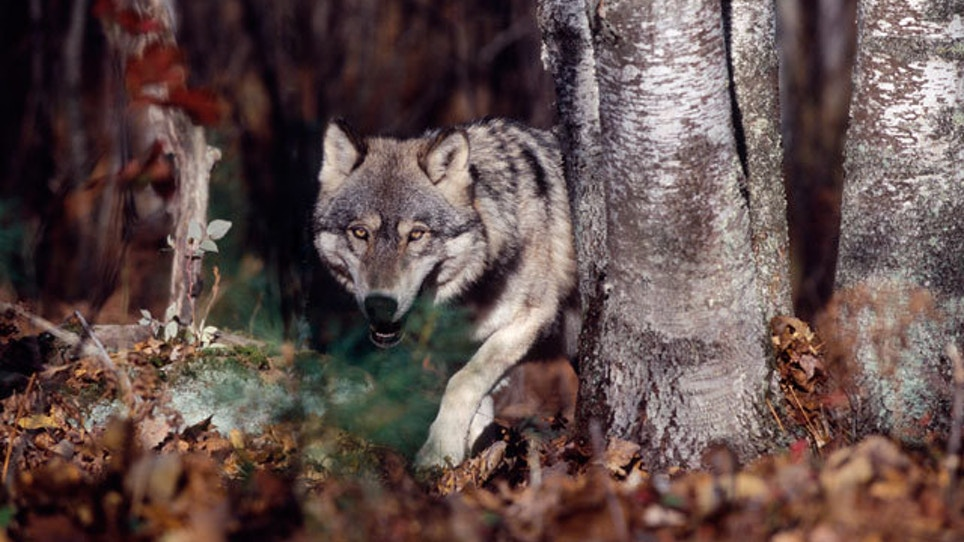 What Do We Really Know About Predator Behavior?