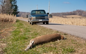 Roadkill Finding Its Way To Dinner Tables Across Montana