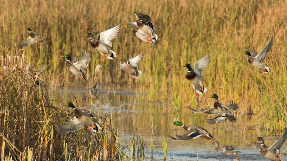 Duck Day Celebrates 20 Years With Lessons About Waterfowl