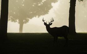 Hunt Deer on Work Days, Especially Thursdays and Fridays