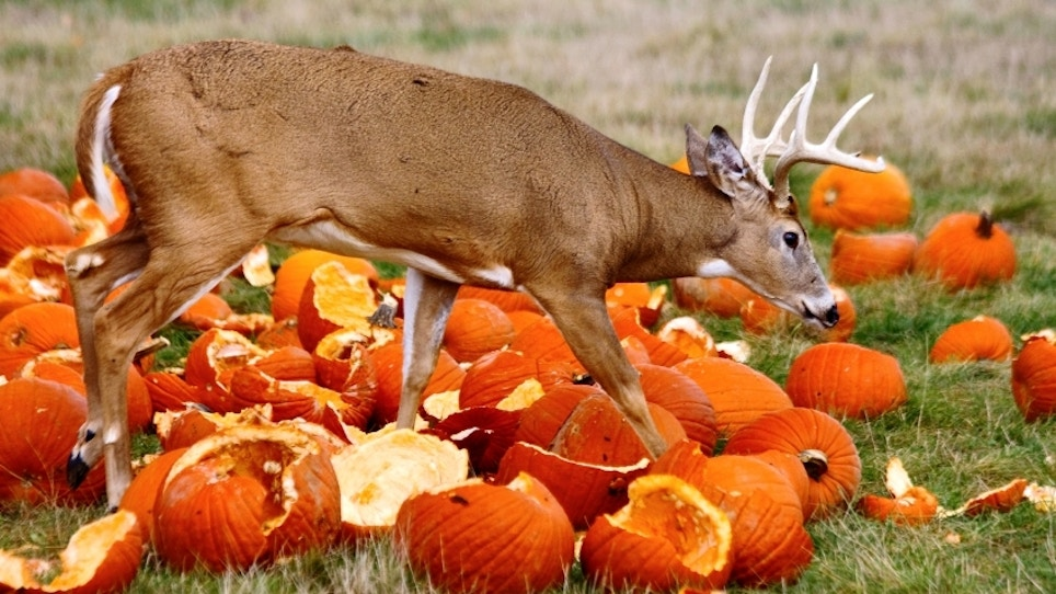 Venison and pumpkin recipes: a perfect fall pairing