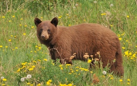 Mother Receives Threats After Having Bear Killed For Safety