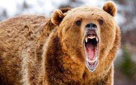 Bear Mauls Man At Alaska Airport