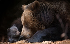 61-Year-Old Punches Black Bear, Forces Retreat