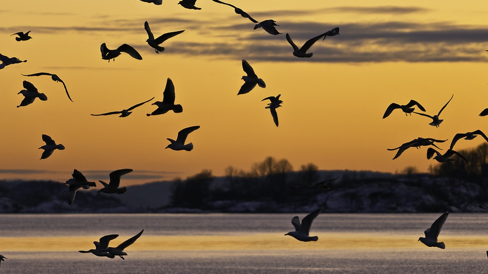 Type C Botulism Found In Dead Waterfowl