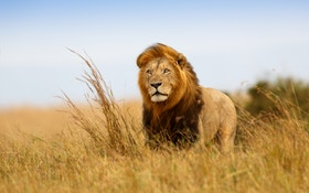 Connecticut, New York Propose Trophy Hunting Ban