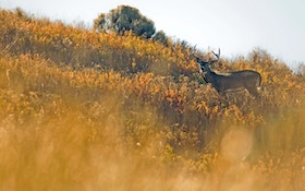Q&A: Deer Rely on Scent,  Stealthy Hunters Should Too
