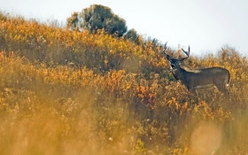 Patterns for Public Land Whitetail Success