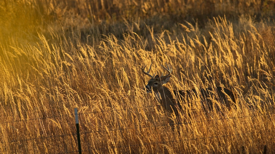 Learn how to estimate antler size