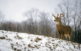 "Hunt winter deer during December's ""perfect storm"""