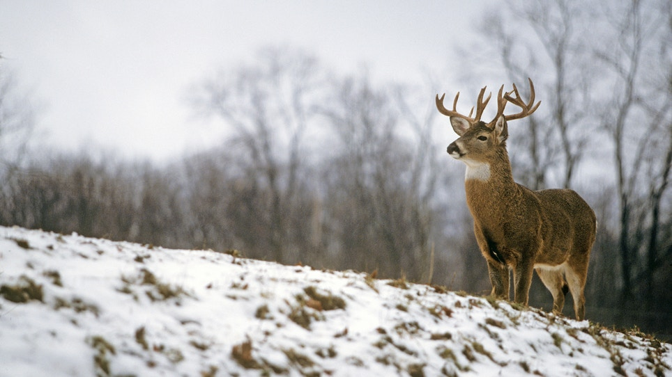 "Hunt winter deer during December's ""perfect storm"""