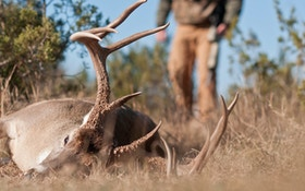 When Is the Best Time to Deer Hunt?