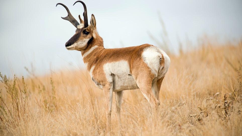 The World's Top 10 Fastest Land Mammals