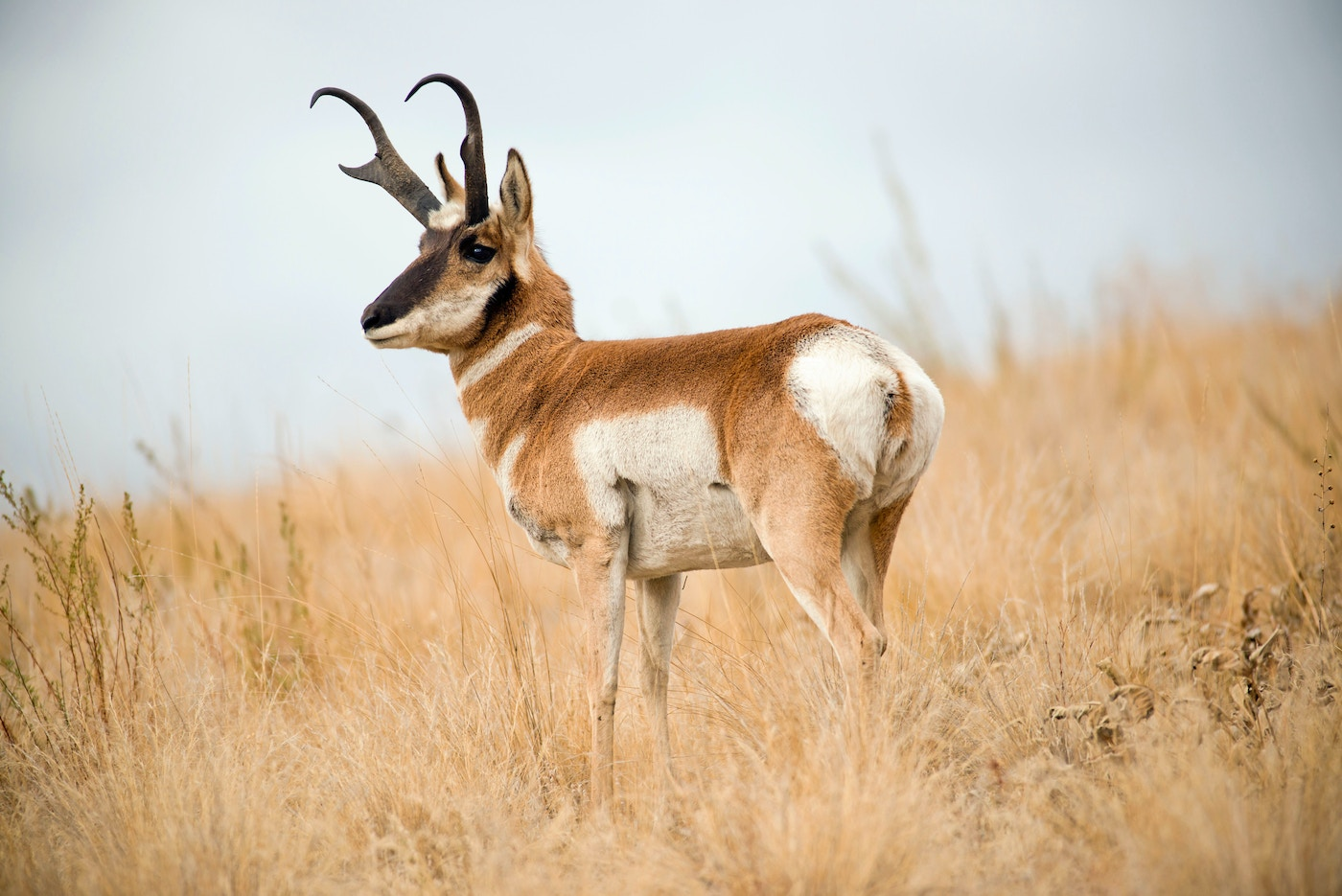 The World S Top 10 Fastest Land Mammals Grand View Outdoors