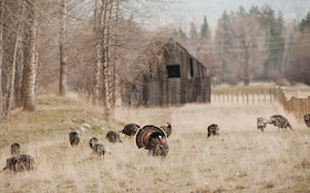 Fall Turkey Hunting Basics: Where, When and How