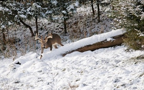 Are Harsh Winters Killing Your Deer?
